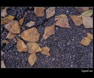 Fall Brown Leaves