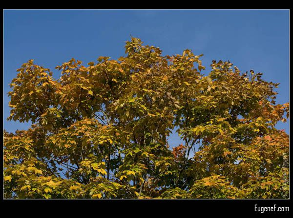 Fall Horizontal Tree