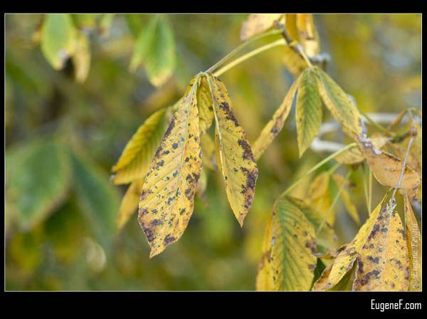 Fall Leaves Changing Color