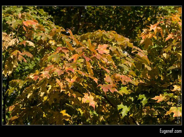 Fall Leaves Yellow Orange