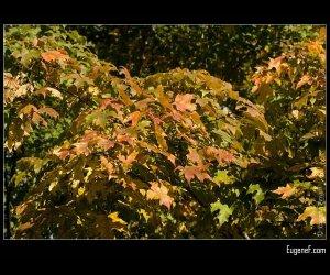 Fall Leaves Yellow Orange