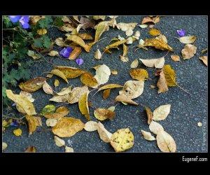 Fall Purple Leaves