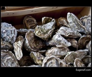 Stacked Oysters