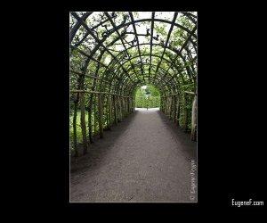 Organic Path