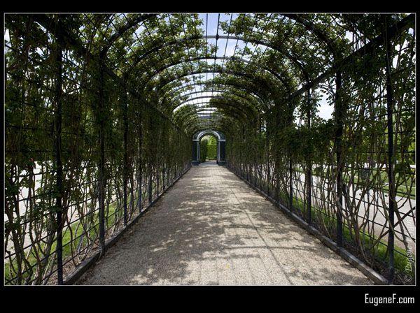 Palace Nature Tunnel
