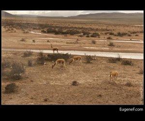 Arequipa Landscape 08