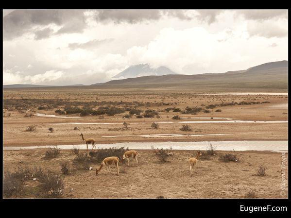 Arequipa Landscape 09