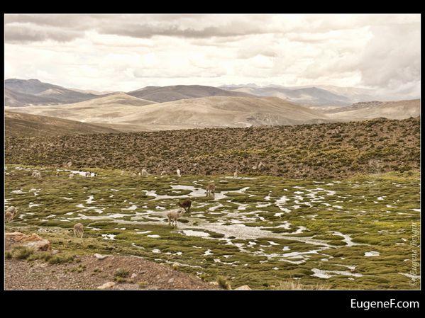 Caylloma Province Landscape 07