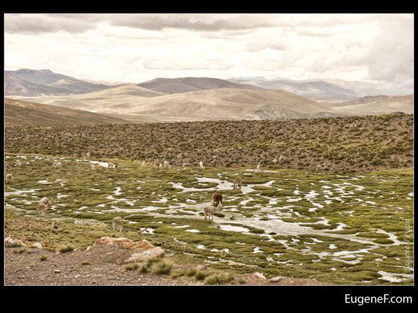 Caylloma Province Landscape 08