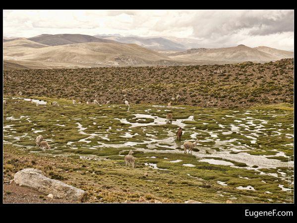 Caylloma Province Landscape 09