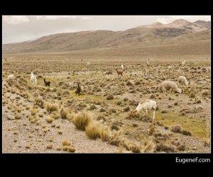 Caylloma Province Landscape 25
