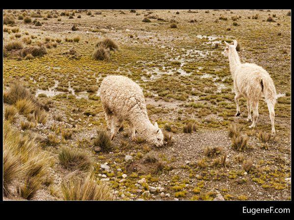 Caylloma Province Landscape 26