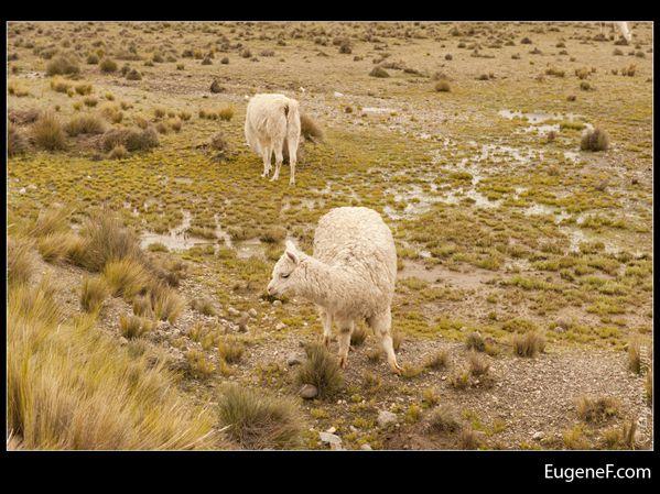 Caylloma Province Landscape 27