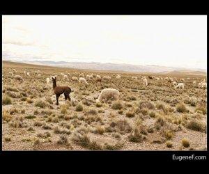 Caylloma Province Landscape 28