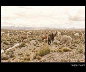Caylloma Province Landscape 31