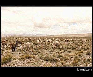 Caylloma Province Landscape 33