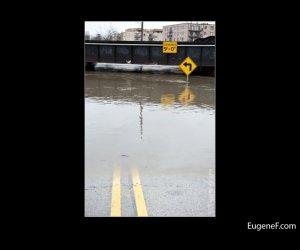 Des Plaines Flooding 17
