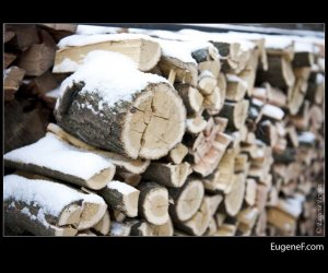 fire wood snow