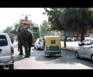 Elephant Walking on Road